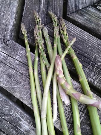 Wild asparagus. Photo by Susan Falkiewicz.