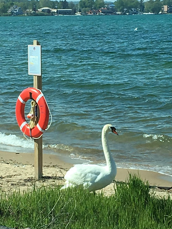 Lifeguard on duty at West Bay. Photo by Meganne Mccardel.