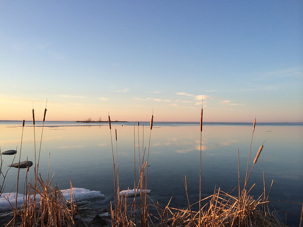 Cattails along the East Grand Traverse Bay shoreline. Photo by Nicole McCalpin.