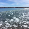 Melting ice on Suttons Bay. Photo by Everett Waisanen.