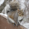 A squirrel says hello. Photo by Michael Novak.