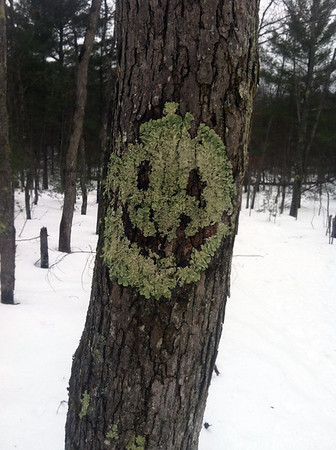 A couple of hikers out at Sand Lake Quiet Area were a little creeped out to see lichen on a tree forming a pumpkin face. Photo by Dave Honsowetz.