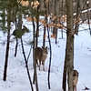Three deer in a row near Lake Ann. Photo by Jan Zolik.