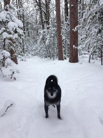 Snowshoeing near Brown Bridge with Yogi. Photo by Marsha Wheaton.