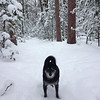 Snowshoeing near Brown Bridge with Yogi. Photo by Marsha Wheaton.