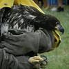 tcr GOeyes eagle 0923