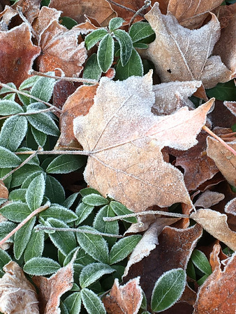Morning frost near Silver Lake. Photo by Tom Compson.