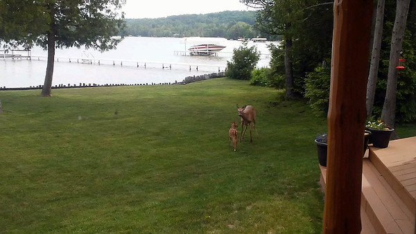 Doe and fawn visit a Lake Leelanau yard. Photo by Kathie Woods.
