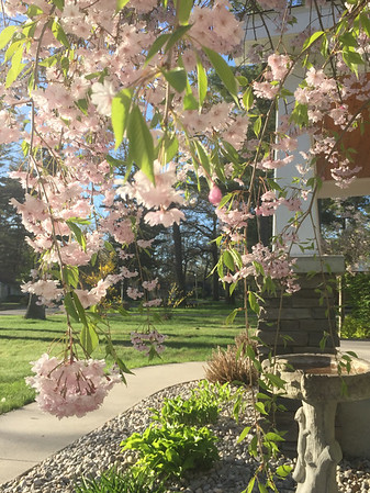 It's spring again! Photo by Meredith McComb.