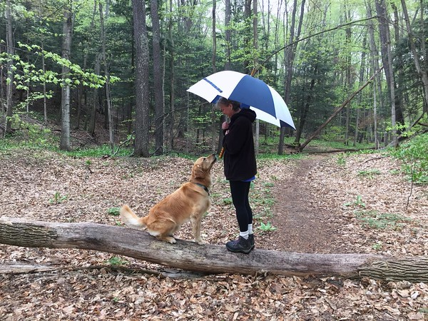 Balancing on a log during a drizzly walk in Leelanau County. Photo by Scott Gravelie.