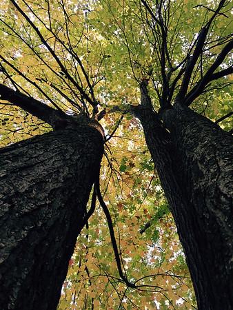 Looking up to the sky through the large trees at Northwestern Michigan College. Photo by Natalie Dykstra.