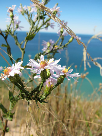 A wildflower over the Empire Bluffs lookout.  Photo by Scott T. Gravelie.