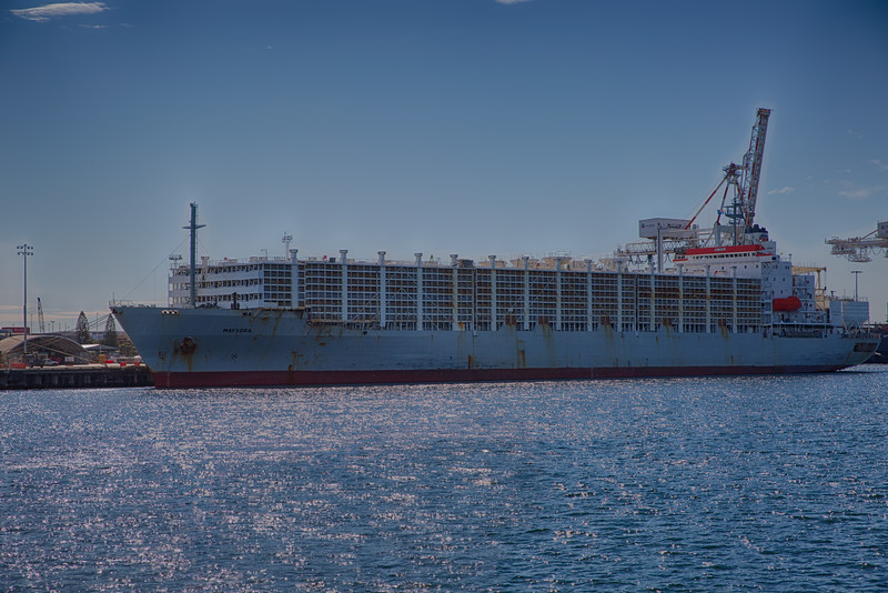 Live animal export ship