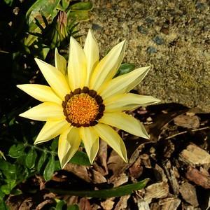 Flowers DSCN2861