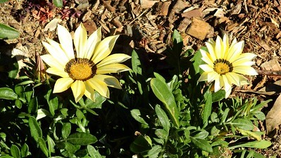 Flowers DSCN2858