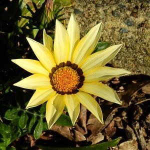 Flower DSCN2861