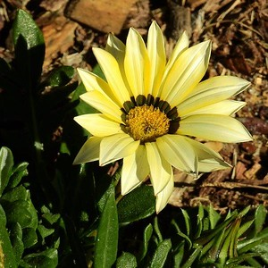 Flowers DSCN2860