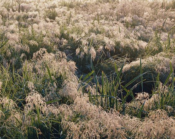 Field Of Dew