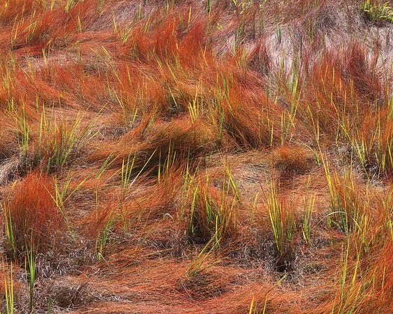 Flaming Grass Igg