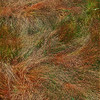 Textures In Grass II