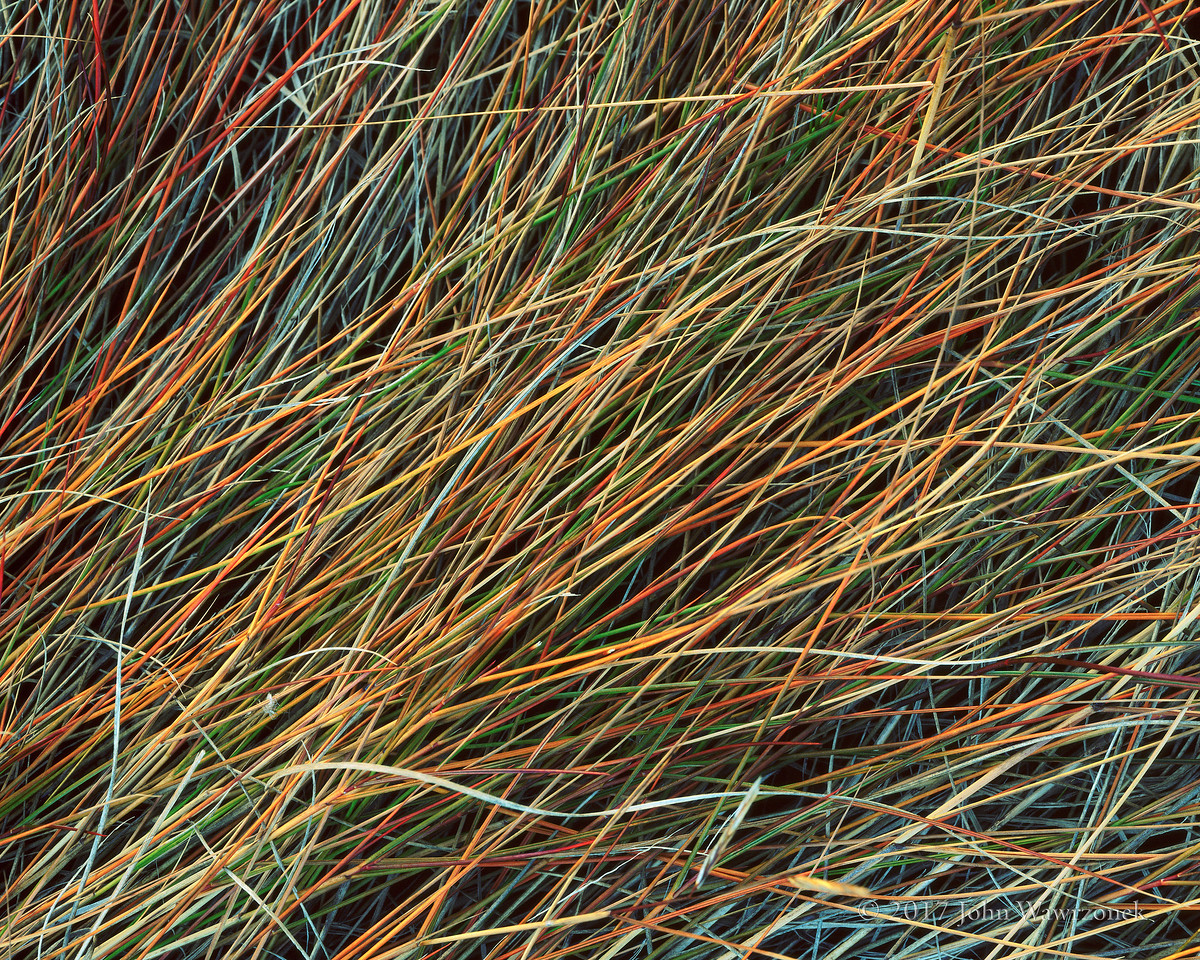 Salt Marsh Grass