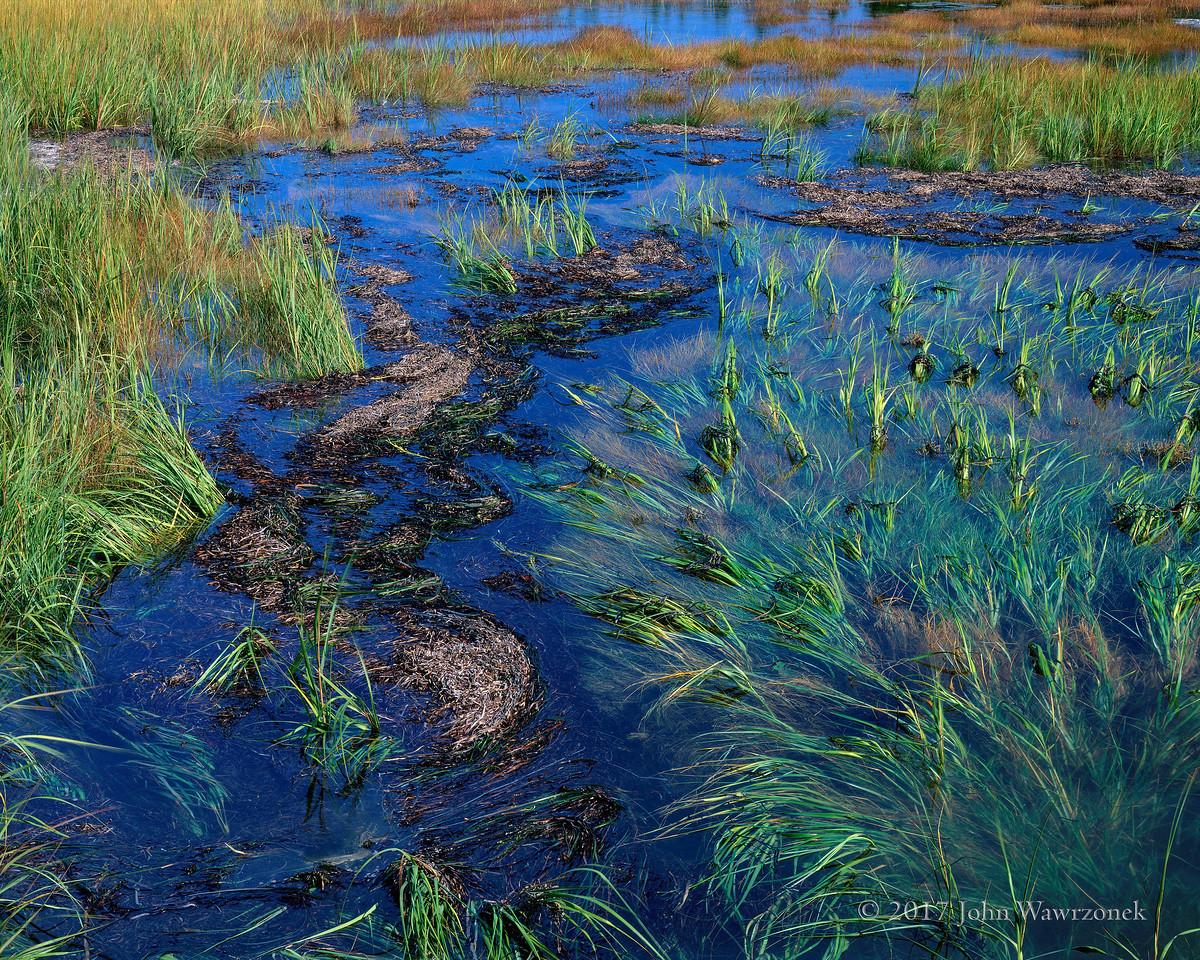 Tidal Marsh I