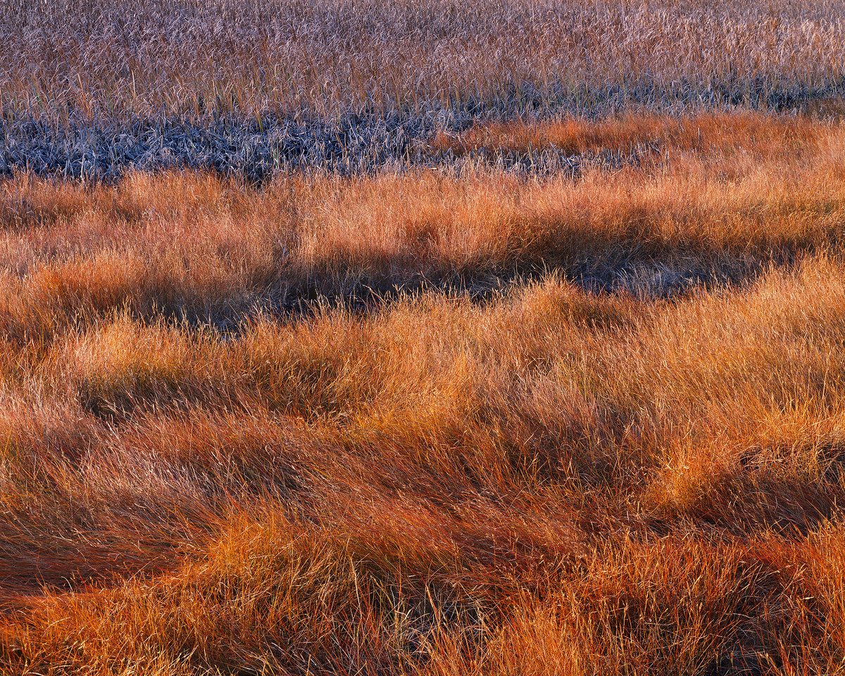 Saltgrass & Cattails