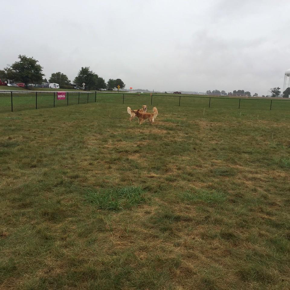 Eukanuba dog park