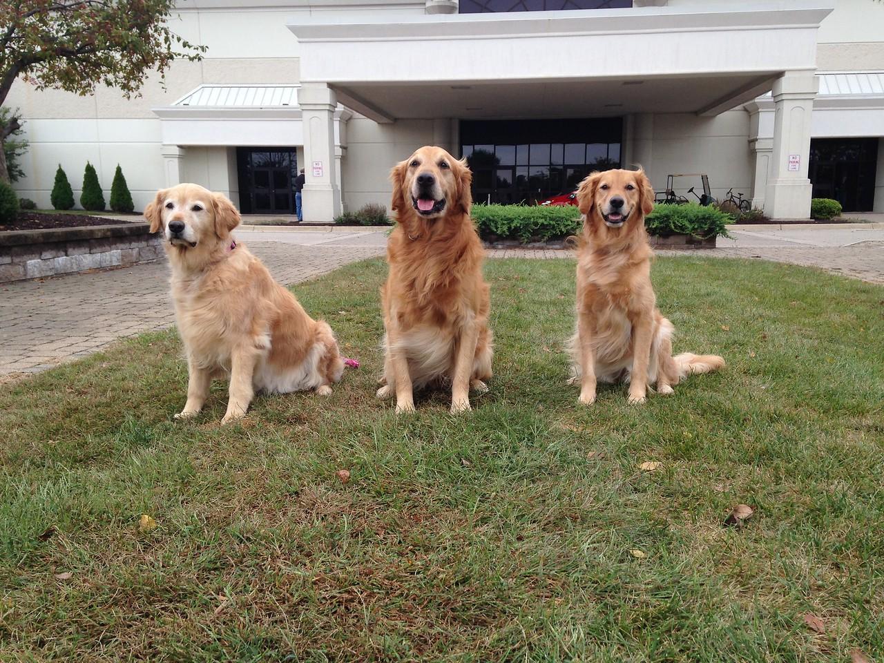 Family photo - Mama Chime, Papa Rocky and Jade
