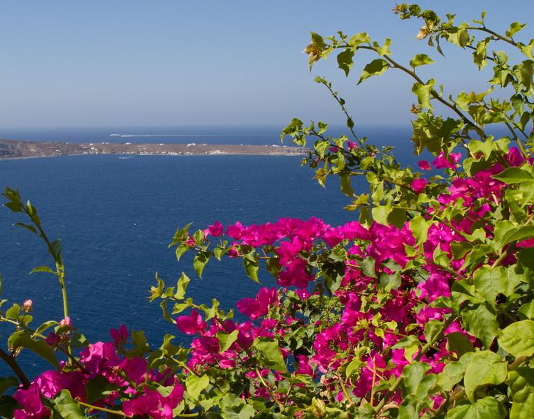 BEAUTIFUL BOUGAINVILLEA. Santorini, Greece.