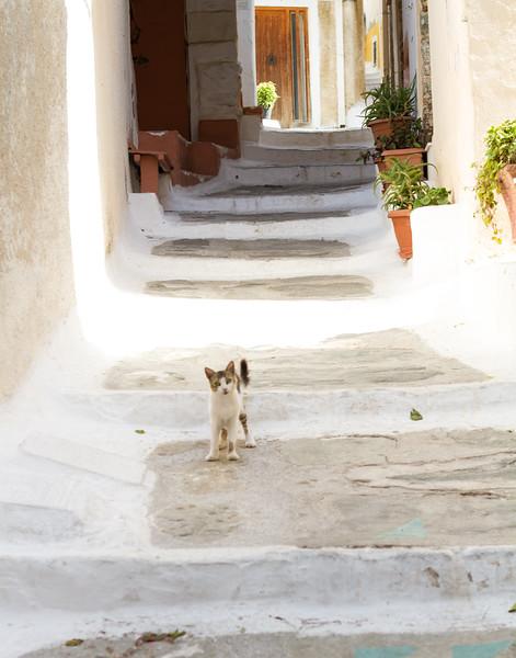 HELLO KITTY. Kea, Greece.