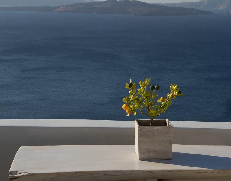 SMALL CITRUS TREE. Santorini, Greece.