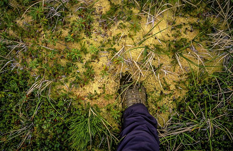 Sponge tundra