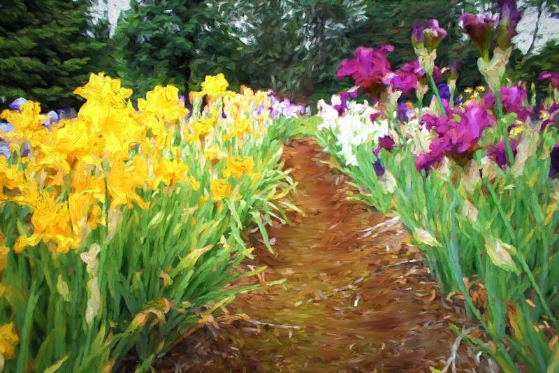 Path Through the Iris