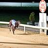 castlelyons jack race 9