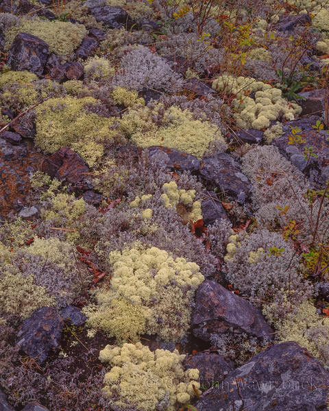 Stones and Reindeer Moss