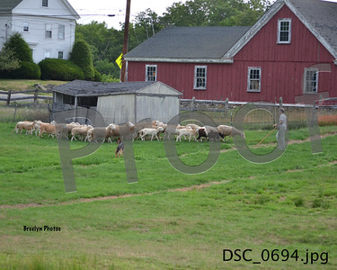 GSDC of SNH 08/21/16 Herding