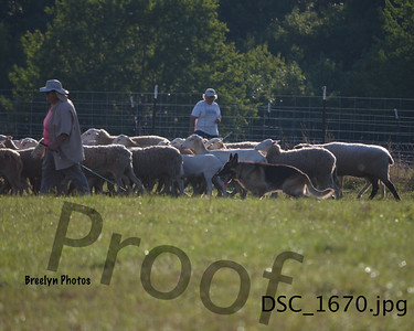 GSDC of SNH 08/28/16 Herding