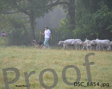 GSDCCM Herding 8/16/15
