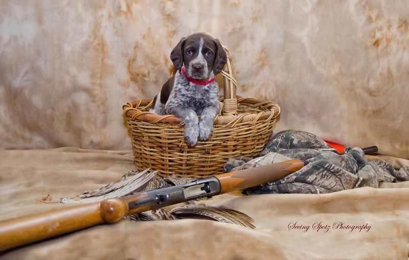 GSP Pups Week 6