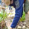 April 2013 Volunteers pulling weeds  (2)
