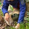 April 2013 Volunteers pulling weeds  (4)
