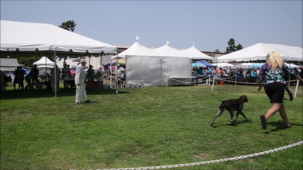 GSP South Bay Kennel Club 2018 Saturday video