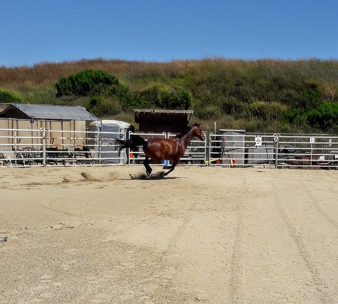 Cruise - Therapeutic Riding Center's Horse - TRC in HB
