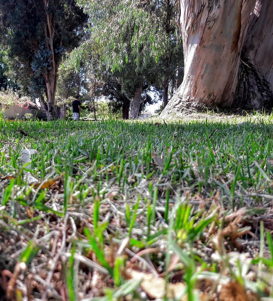 GWTI Series: Dogs Point of view - Walk in the park
