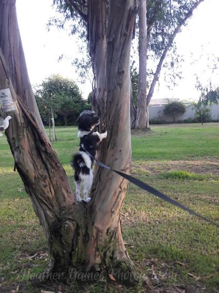 Bodhi - Squirrel Hunting