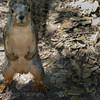 Got Nuts!