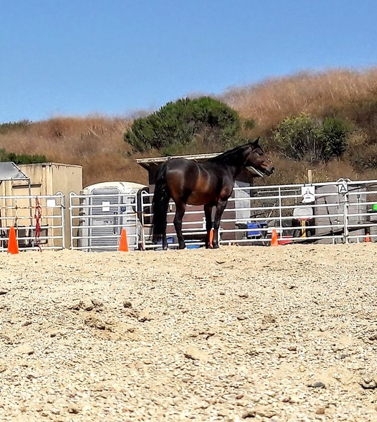Duke - TRC helper! Therapeutic Riding Center in HB