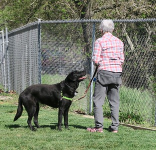 .... later in the gym each dog will have to perform differently based on the color of the eggs and how many of each the handler picked up