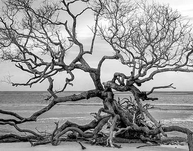 Tybee Tree